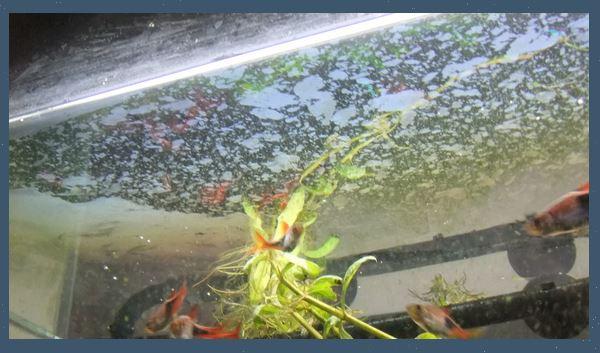 水槽の水面に油膜が張っています。油膜が貼ることで酸素が水に触れることができず、溶存酸素量が低下してしまいます。