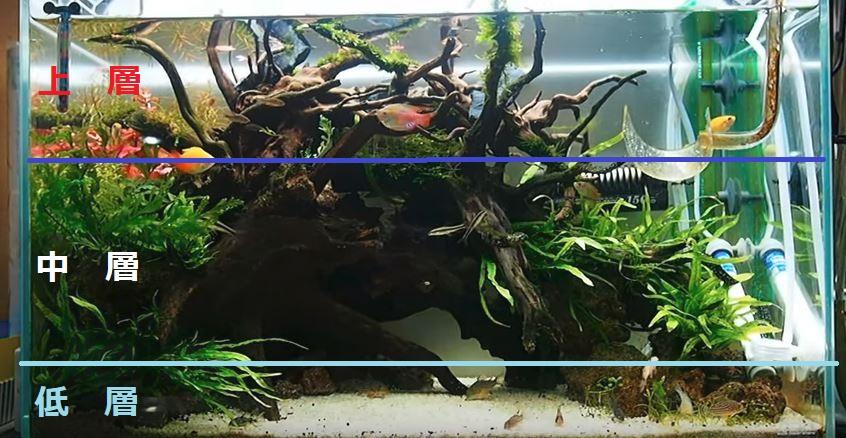 水槽も層が分かれます。底面に近いほうを低層。水面に近いほうを上層。中間を中層と分類。コリドラスはこの低層を住処としています。同じ低層を住処とする熱帯魚と混泳する場合はトラブルになることもあります。