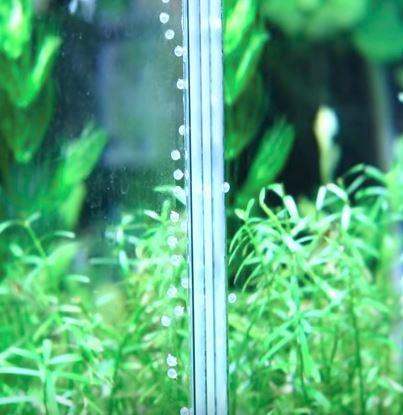 コリドラスの卵が水槽のガラス面に縦に並ぶように産み付けられている