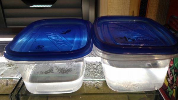 ブラインシュリンプの卵を孵化させるための水温を高くしたいので、乾燥卵と塩水の入ったタッパーを、暖かい水槽の二の上に並べて保温しています。