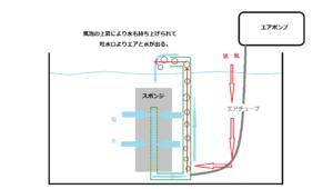 エアポンプから水を張った水槽に設置しているスポンジフィルターに空気が送り込まれています。エアは上昇してフィルター内で水流が発生します。スポンジ部分からも水が吸水され、吐水口で排出されます。